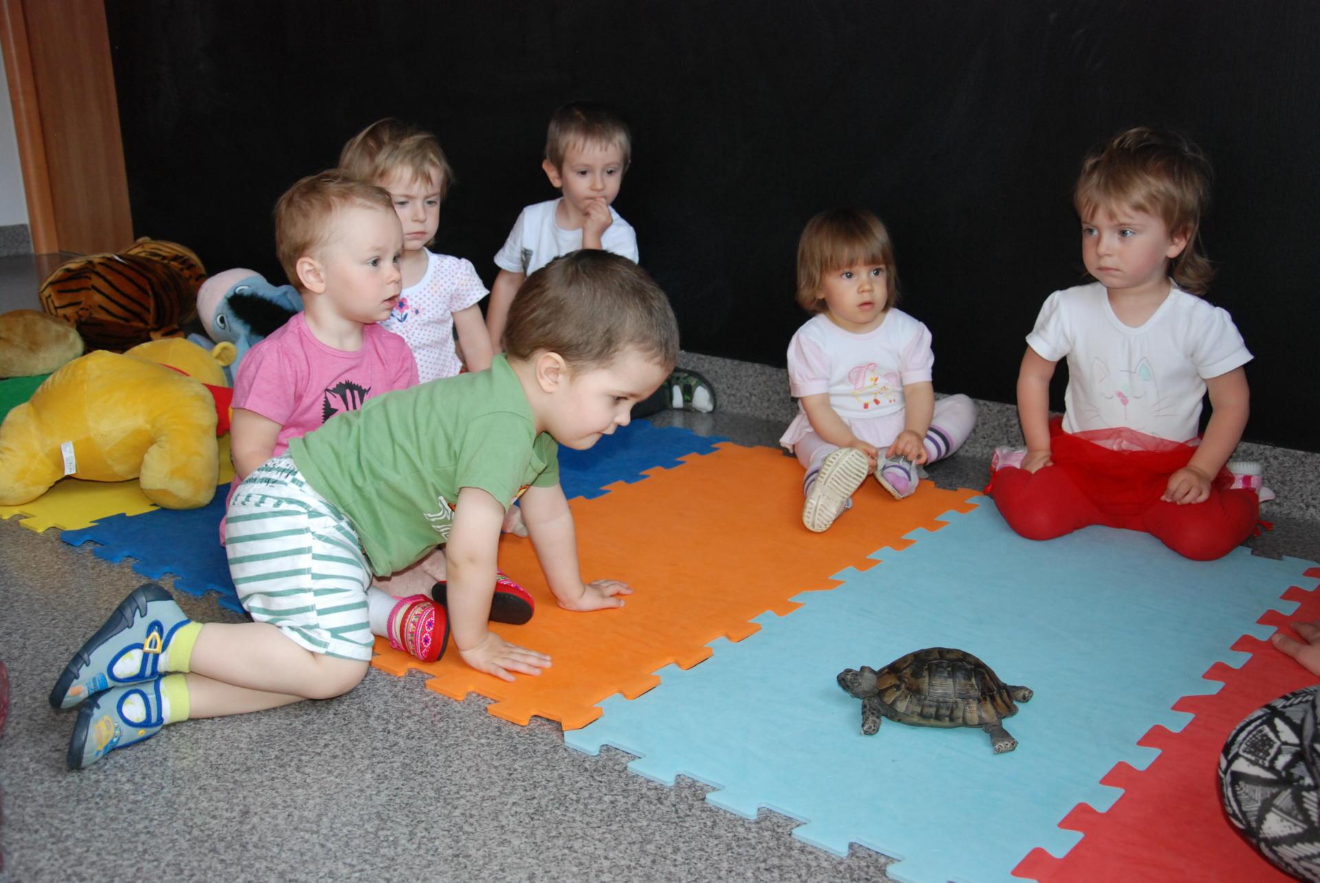 Dzień  żółwia